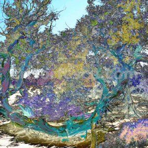 magic-tree-no2-impressionist-photography-digital-print-impressionism-art-giclee