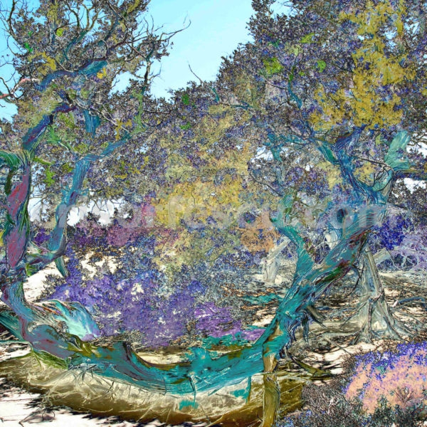 magic-tree-no2-impressionist-photography-digital-print-impressionism-art-giclee