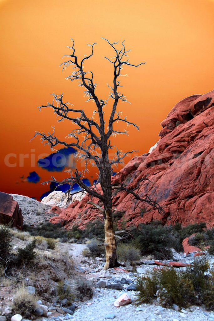 Survivor_in_Calico_Hills-surrealist-photography-digital-print-surrealism-art-giclee